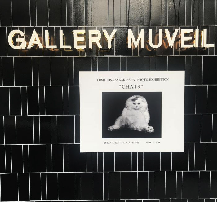 GALLERY MUVEILで写真家・榊原俊寿氏のネコ写真展開催