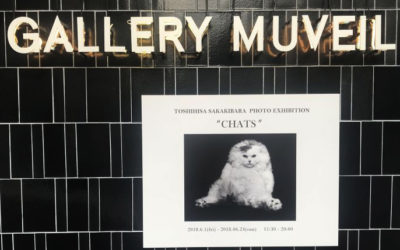 GALLERY MUVEIL(ギャラリー ミュベール)で写真家・榊原俊寿氏のネコ写真展開催