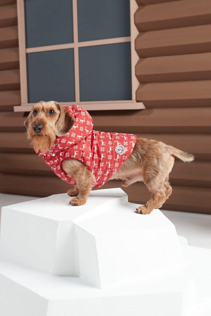 【モンクレール ポルド ドッグ クチュール】が発売 モンクレール ジーニアスの2019年秋冬シーズン第7弾