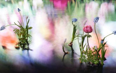 """「Van Cleef & Arpels(ヴァン クリーフ&アーペル)」、代官山で""""LIGHT OF FLOWERS ハナの光""""を開催 ショートムービーが公開"""