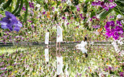 「チームラボプラネッツ TOKYO DMM」、2つの庭園作品が誕生 巨大アートに融け込む没入感が魅力